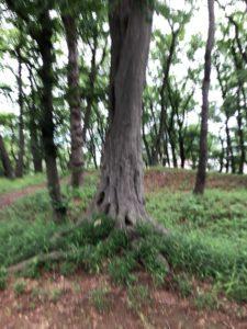 頂部の高木
