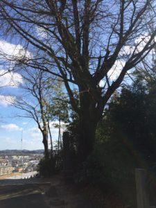 階段の上の大木が町を見下ろす