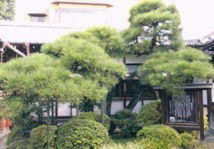 彦九郎の松