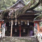 本殿とネズの老樹